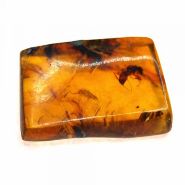 Ambre forme trapèze avec inclusion insecte 20.5x13.8x6.4mm 1.37gr_AMB_009_001